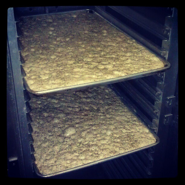 Glight house made Focaccia in the proofer. - from Instagram