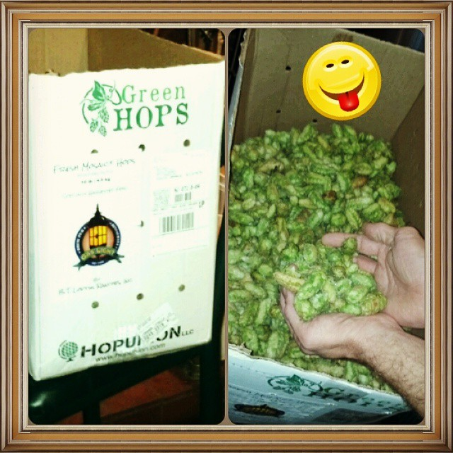 Adding the green/wet hops to the B.A. & the E.S.B. Yummy. #wethops - from Instagram