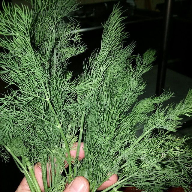 #dill my second favorite #herb - from Instagram