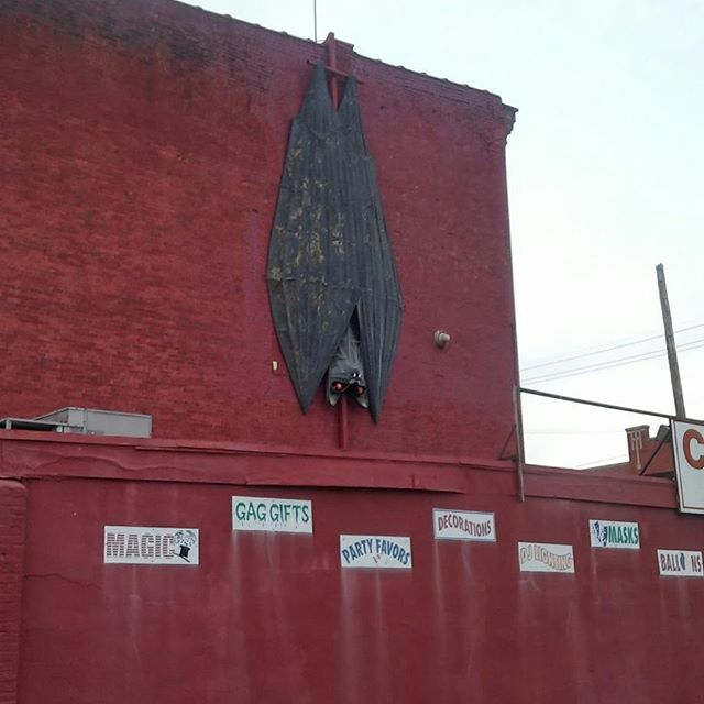2 giant bats in Louisville - from Instagram